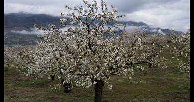 Valle del Jerte ruta circular sierra