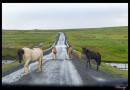 Cruce con caballos en carretera 59 de Islandia