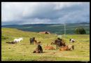 Islandia día 5: Dettifoss, Hafragilsfoss, Asbyrgi, Selfoss, Krafla, Jardbodin