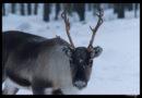 Ruta del viaje por la Laponia Finlandesa de 15 días en invierno